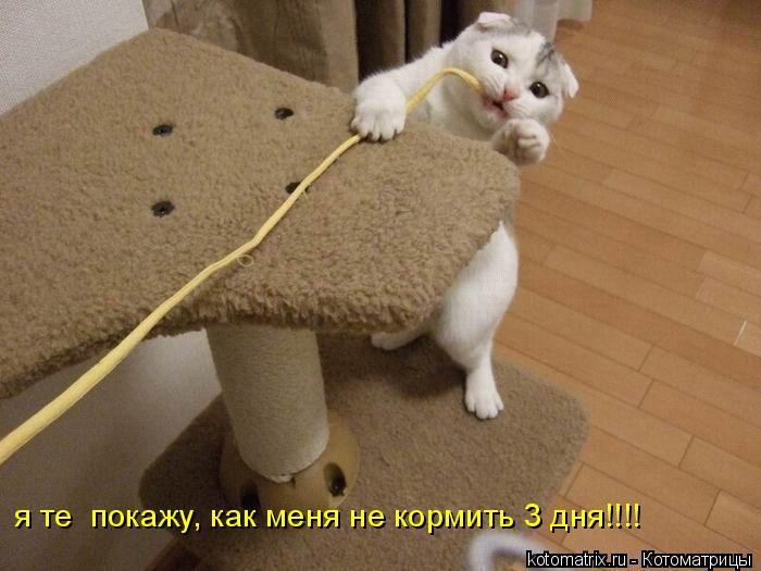 Котоматрица: я те  покажу, как меня не кормить 3 дня!!!!