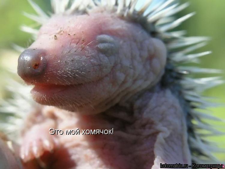 Котоматрица: Это мой хомячок!