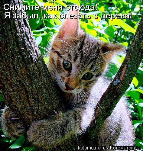 Котоматрица: Снимите меня отсюда! Я забыл, как слезать с дерева!