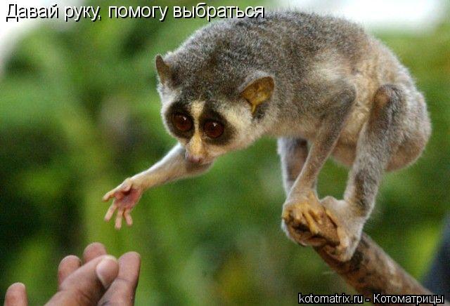 Котоматрица: Давай руку, помогу выбраться