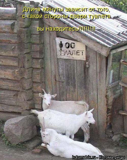 Котоматрица: Длина минуты зависит от того, с какой стороны двери туалета вы находитесь!!!!!!!!!