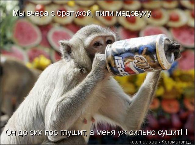 Котоматрица: Мы вчера с братухой, пили медовуху... Он до сих пор глушит, а меня уж сильно сушит!!!