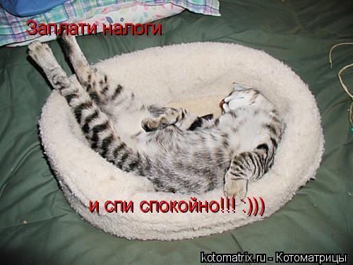Котоматрица: Заплати налоги и спи спокойно!!! :)))