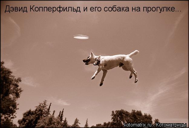 Котоматрица: Дэвид Копперфильд и его собака на прогулке...