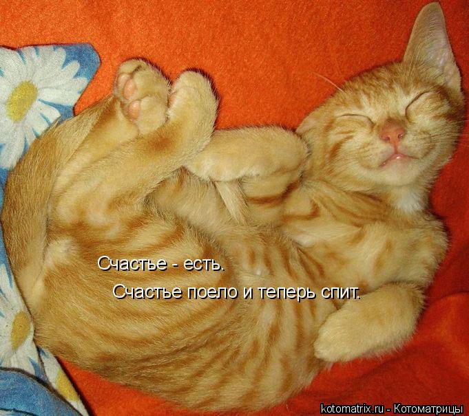 Котоматрица: Счастье - есть. Счастье поело и теперь спит.