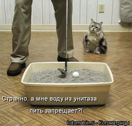 Котоматрица: Странно, а мне воду из унитаза  пить запрещает?!