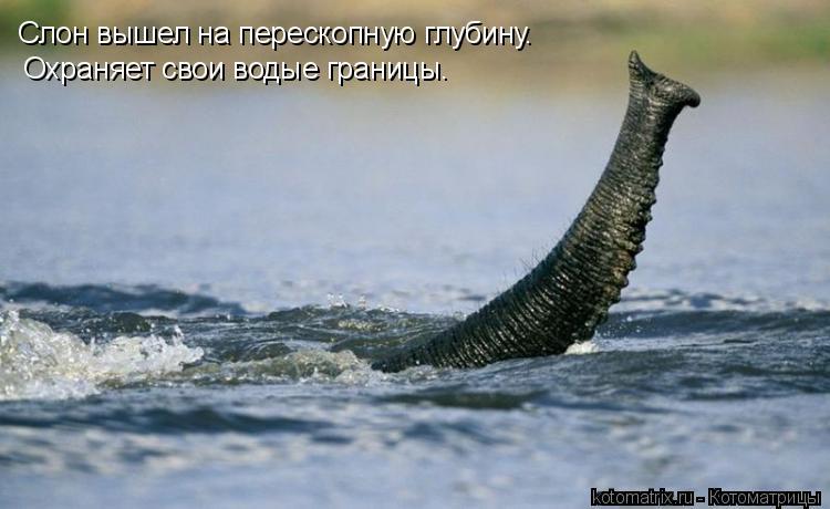 Котоматрица: Слон вышел на перескопную глубину. Охраняет свои водые границы.