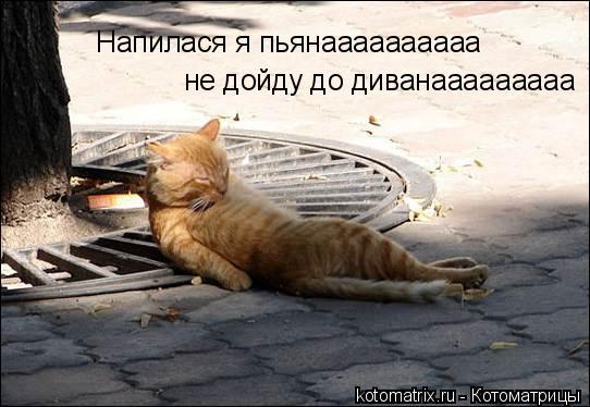 Котоматрица: Напилася я пьянаааааааааа не дойду до диванааааааааа