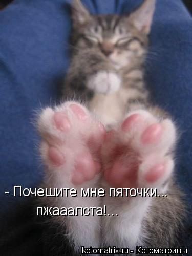 Кликните на фото для просмотра увеличеного изображения)