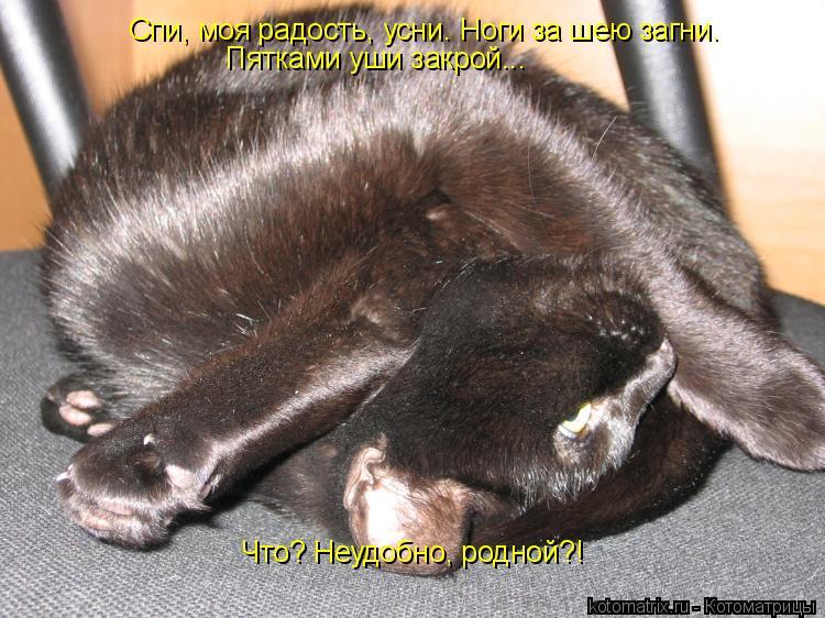Котоматрица: Спи, моя радость, усни. Ноги за шею загни. Пятками уши закрой... Что? Неудобно, родной?!