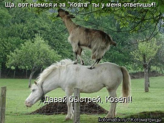 """Котоматрица: Давай быстрей, Козёл!! Ща, вот наемся и за """"Козла"""" ты у меня ответишь!!"""