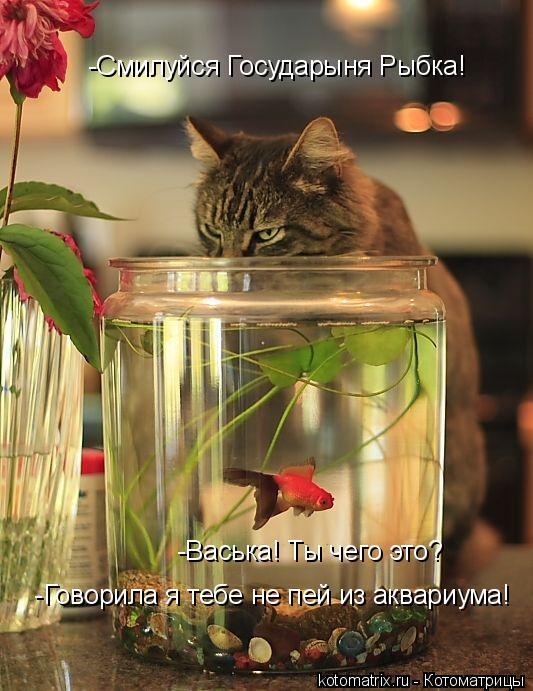 Котоматрица: -Смилуйся Государыня Рыбка!  -Васька! Ты чего это?   -Говорила я тебе не пей из аквариума!