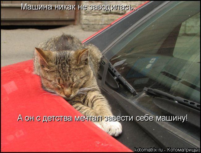 Котоматрица: Машина никак не заводилась... А он с детства мечтал завести себе машину!