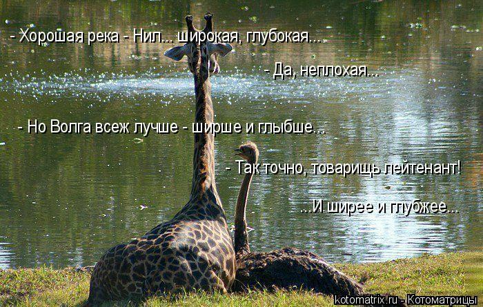 Котоматрица: - Хорошая река - Нил... широкая, глубокая... - Да, неплохая... - Но Волга всеж лучше - ширше и глыбше... - Так точно, товарищь лейтенант!  ...И ширее