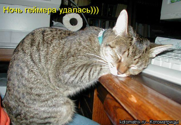 Котоматрица: Ночь геймера удалась)))