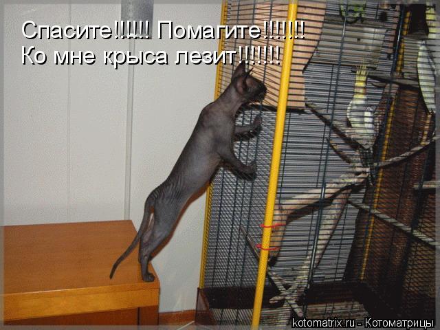 Котоматрица: Спасите!!!!!! Помагите!!!!!!! Ко мне крыса лезит!!!!!!!