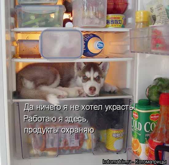 Котоматрица: Да ничего я не хотел украсть! Работаю я здесь, продукты охраняю