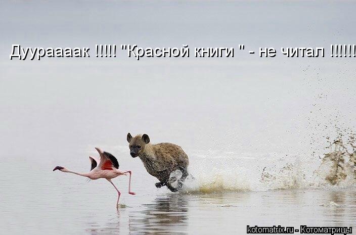 """Котоматрица: Дуураааак !!!!! """"Красной книги """" - не читал !!!!!!"""