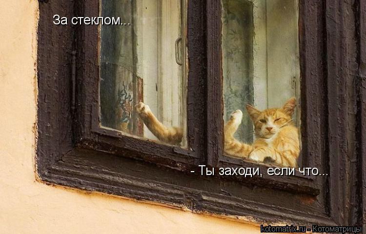 Котоматрица: За стеклом... - Ты заходи, если что...