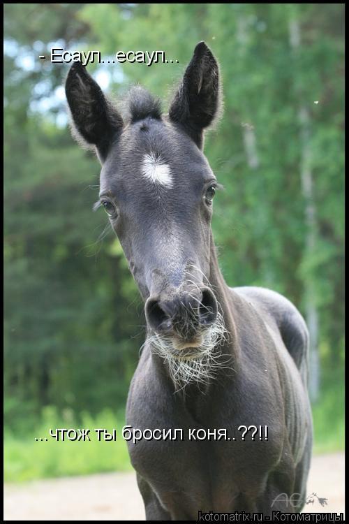 Котоматрица: - Есаул...есаул... ...чтож ты бросил коня..??!!