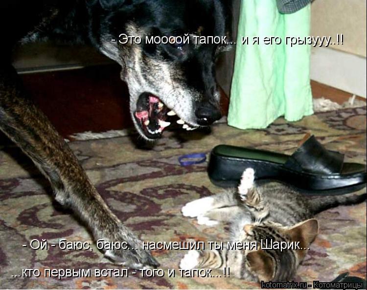 Котоматрица: - Это моооой тапок... и я его грызууу..!! - Ой - баюс, баюс... насмешил ты меня Шарик... ...кто первым встал - того и тапок...!!