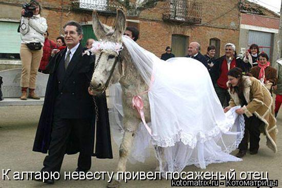 Котоматрица: К алтарю невесту привел посаженый отец