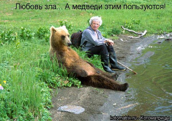 Котоматрица: Любовь зла... А медведи этим пользуются!