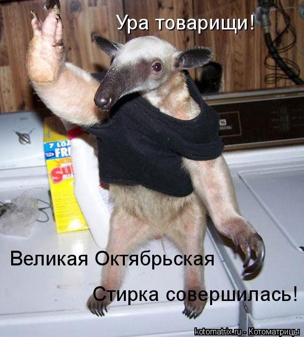 Котоматрица: Ура товарищи! Великая Октябрьская  Стирка совершилась!