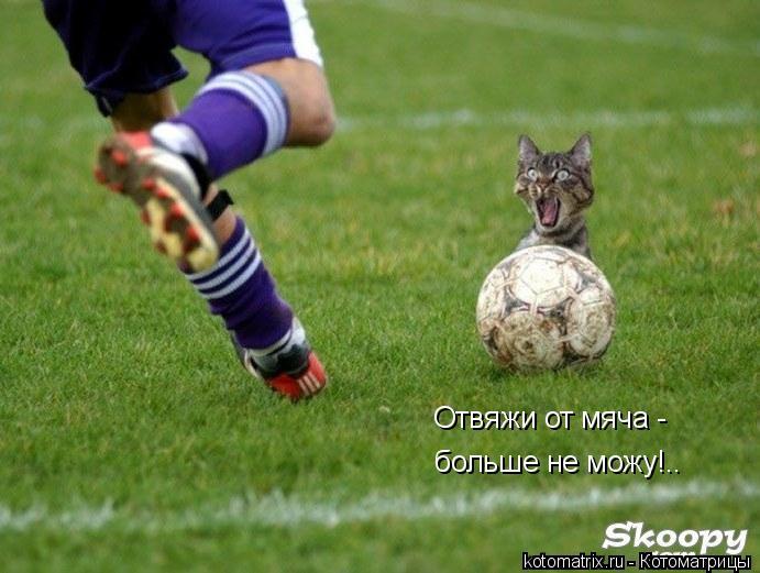 Котоматрица: Отвяжи от мяча -  больше не можу!..