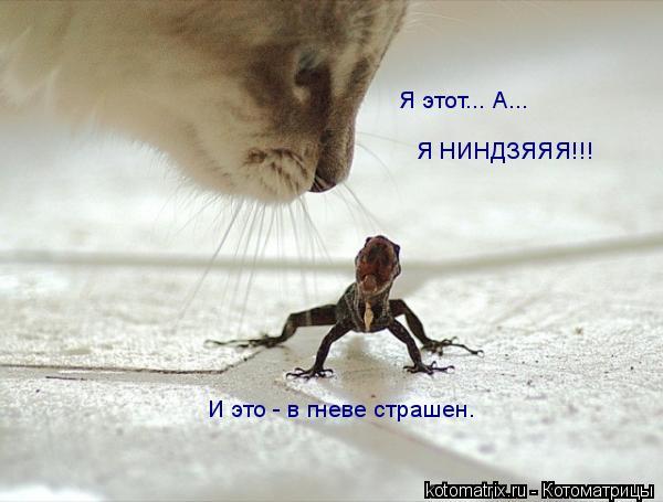 Котоматрица: Я этот... А...  Я НИНДЗЯЯЯ!!! И это - в гневе страшен.
