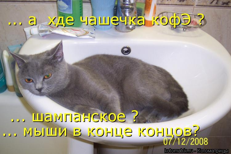Котоматрица: ... а  хде чашечка кофЭ ?  ... шампанское ? ... мыши в конце концов?