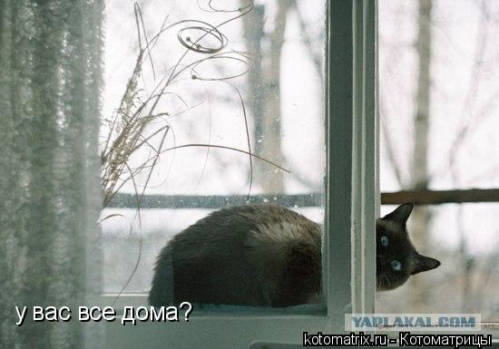 Котоматрица: у вас все дома?
