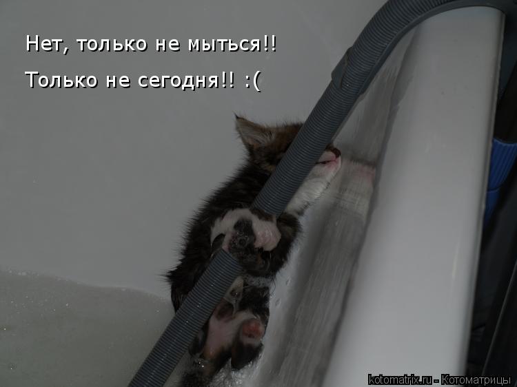 Котоматрица: Нет, только не мыться!! Только не сегодня!! :(