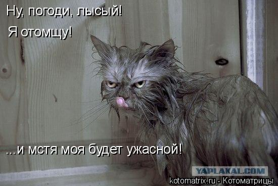 Котоматрица: Ну, погоди, лысый! Я отомщу! ...и мстя моя будет ужасной!