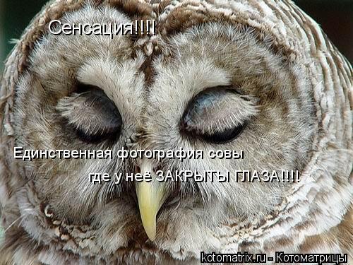 Котоматрица: Сенсация!!!! Единственная фотография совы где у неё ЗАКРЫТЫ ГЛАЗА!!!!