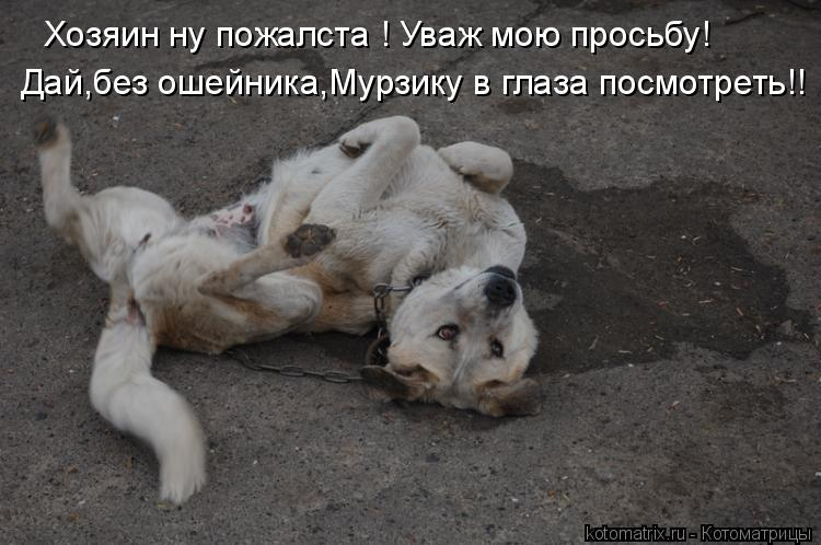Котоматрица: Хозяин ну пожалста ! Уваж мою просьбу! Дай,без ошейника,Мурзику в глаза посмотреть!!