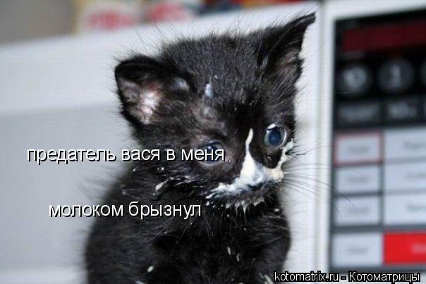 Котоматрица: предатель вася в меня молоком брызнул