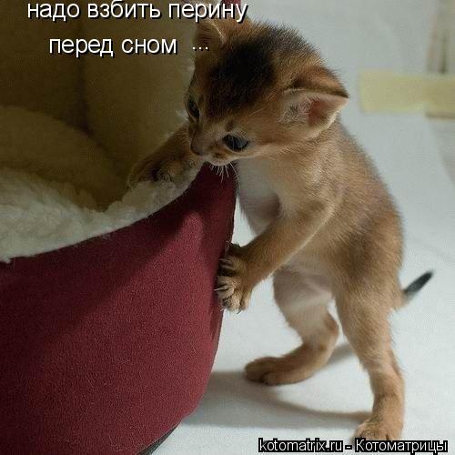 Котоматрица: надо взбить перину перед сном ...