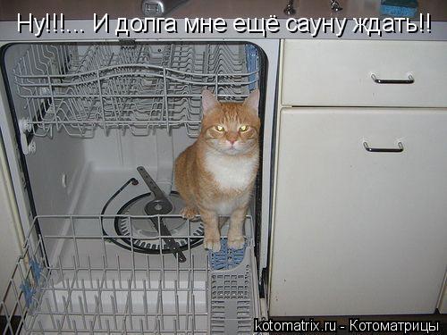 Котоматрица: Ну!!!... И долга мне ещё сауну ждать!!
