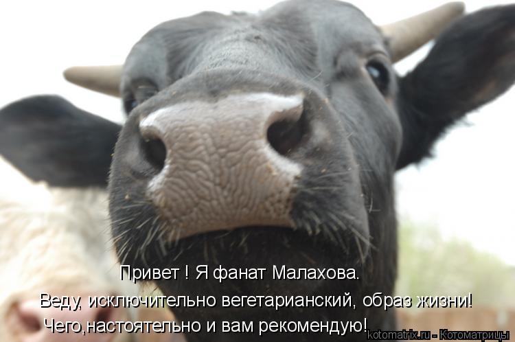 Котоматрица: Привет ! Я фанат Малахова. Веду, исключительно вегетарианский, образ жизни! Чего,настоятельно и вам рекомендую!