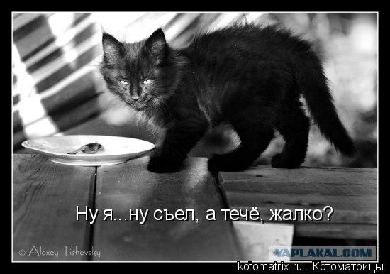 Котоматрица: Ну я...ну съел, а течё, жалко?