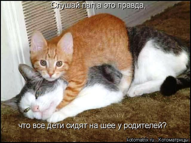 http://kotomatrix.ru/images/lolz/2008/07/12/zy.jpg
