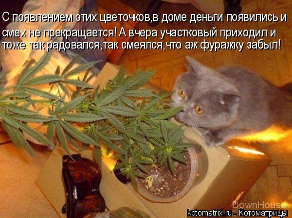 Котоматрица: С появлением этих цветочков,в доме деньги появились и смех не прекращается! А вчера участковый приходил и тоже так радовался,так смеялся,чт