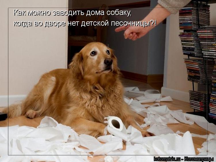 Котоматрица: Как можно заводить дома собаку, когда во дворе нет детской песочницы?!