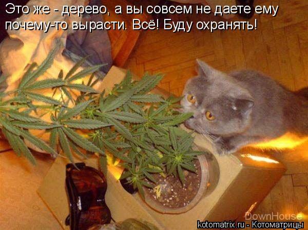 Котоматрица: Это же - дерево, а вы совсем не даете ему почему-то вырасти. Всё! Буду охранять!