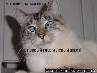 Котоматрица: я такой красивый кот! правый глаз и левый жжот!