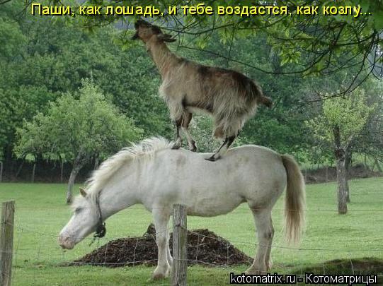 Котоматрица: Паши, как лошадь, и тебе воздастся, как козлу...