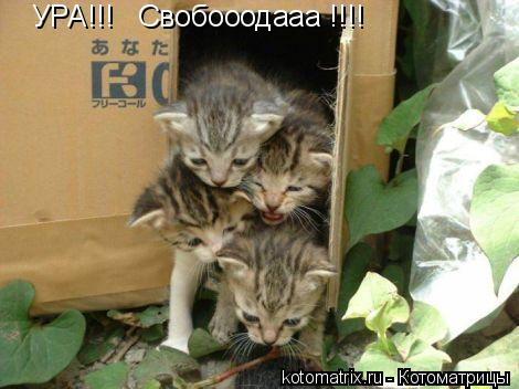 Котоматрица: УРА!!!   Свобооодааа !!!!