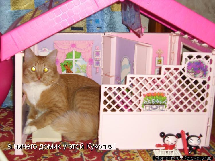 Котоматрица: а ничего домик у этой Куколки!