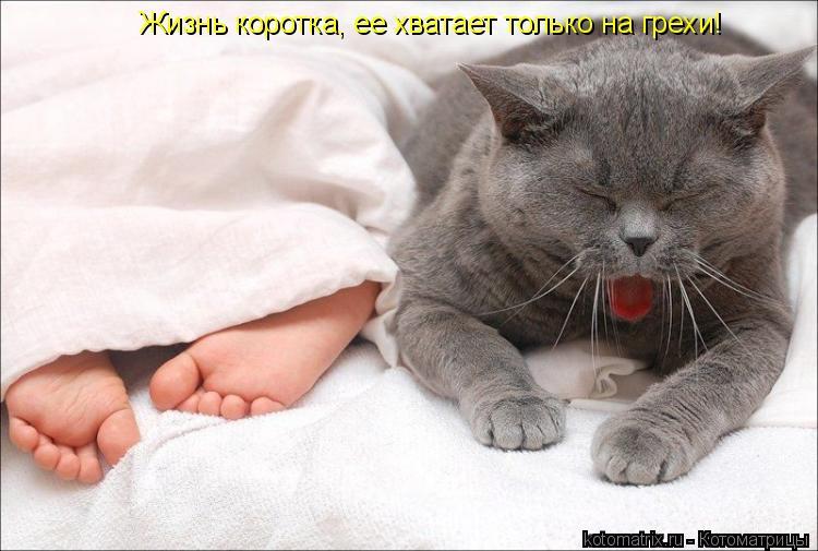 Котоматрица: Жизнь коротка, ее хватает только на грехи!